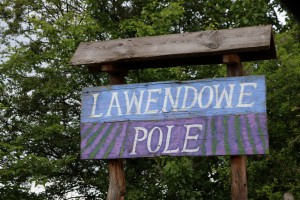 Lawendowe pole