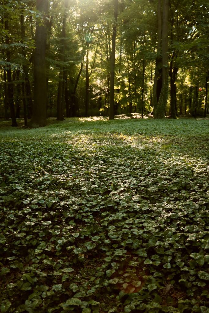 Park Sołacki Poznań (2)