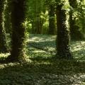 Park Sołacki Poznań (4)