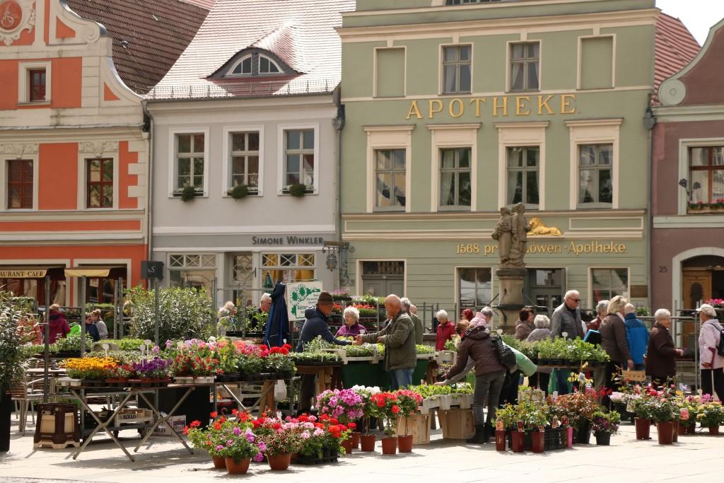 Targ kwiatów i muzeum aptekarstwa w Cottbus