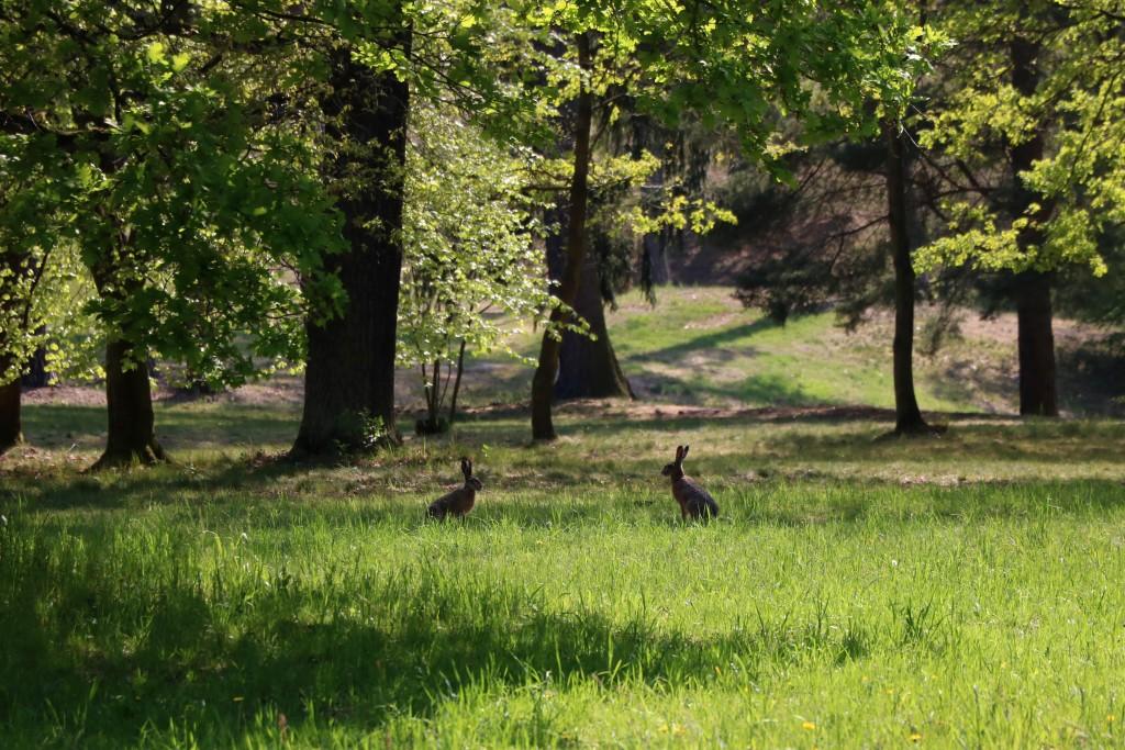 Dzika zwierzyna w parku Pucklera