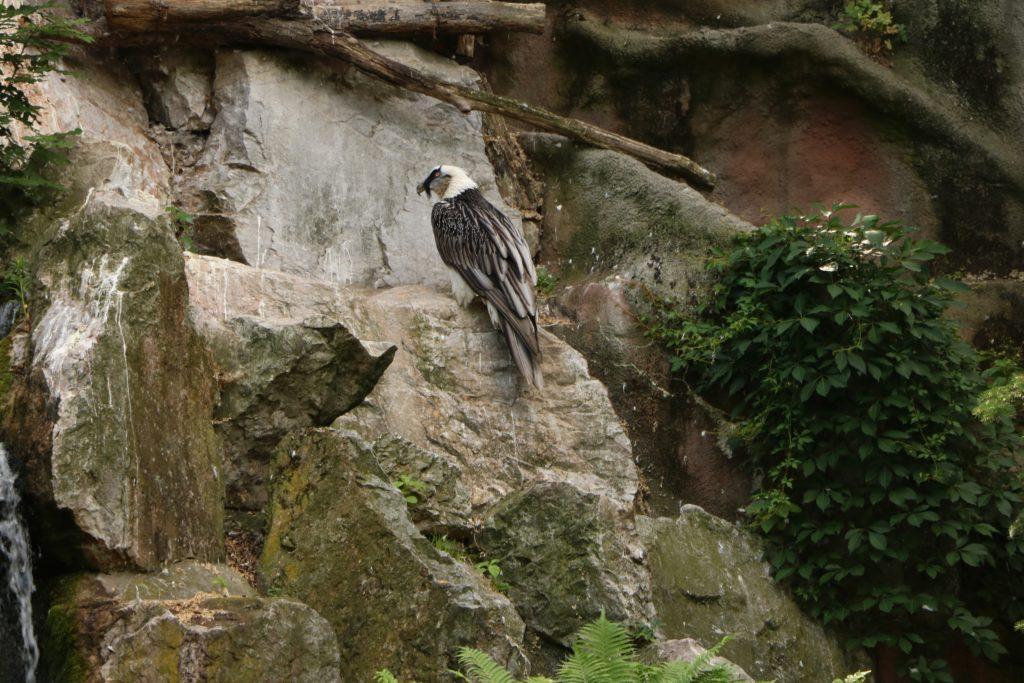 Ptaki Nowe Zoo Poznań