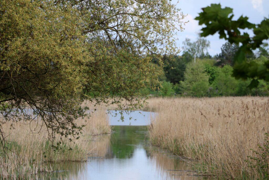 Jezioro Lusowskie